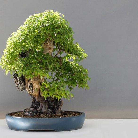 bonsai-2211102_960_720